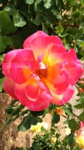 Cochise Campus Flower